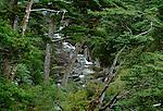 Forest landscape, Japan