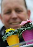 Foto: VidiPhoto<br /> <br /> HUISSEN &ndash; Bart Beijer, eigenaar van pot- en perkplantenkwekerij Bejafleur in Huissen bij Arnhem, is een alleskunner. Zo&rsquo;n beetje alle touwtjes van de 3,5 ha. grote kwekerij houdt hij zelf stevig in handen. En bepaald niet zonder succes. De ongeveer vijftien soorten pot- en perkplanten in vele vari&euml;teiten gaan voor 95 procent heel Europa door. Slechts 5 procent is bestemd voor de Nederlandse markt. Jaarlijks gaan er zo een kleine 8 miljoenen potplanten -&ldquo;op eigen kracht&rdquo;- de deur uit. Het zijn vooral de mini&rsquo;s en micro&rsquo;s, vanaf potmaat zes, die zich nog steeds in toenemende belangstelling mogen verheugen. De jaarlijkse omzetstijging vanaf 2004, toen Bart Beijer het bedrijf overnam, zegt voldoende. Dat wordt niet zozeer bereikt door uitbreiding van het areaal, maar vooral door fine tuning, zoals kwaliteitsverbetering en minder uitval. Daar tegenover staat dat de mini&rsquo;s en micro&rsquo;s zeer bewerkelijk zijn. Automatisering is vrijwel niet mogelijk. En succes is alleen verzekerd bij jarenlange ervaring en deskundigheid. Daarbij is Bejafleur gespecialiseerd in potplanten die in Nederland bijna verdwenen zijn. Voor copieergedrag is de Betuwse ondernemer dan ook niet bang. Foto: Bart Beijer met mini-primula's.