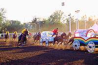 Cowboys racing Chuckwagons in Chuckwagon Racing Event at Calgary Stampede, Calgary, Alberta, Canada - Editorial Use Only