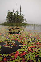 &quot;Colorful Water Shield&quot;<br />