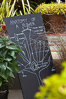 Anatomy of a Flower, drawing display at 2013 California Spring Trials, Pacific Plug, Watsonville, CA