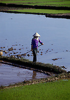 December 6th 1993-PHI LA, NORTHERN VIETNAM-A woman prepares rice paddies for planting in Northern Vietnam's Phi La.  Photo by Daniel J. Groshong/Tayo Photo Group