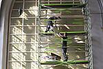 Foto: VidiPhoto<br /> <br /> ARNHEM - De Eusebiuskerk in Arhem staat niet alleen aan de buitenkant in de steigers, maar deze week ook aan de binnenzijde. Met man en macht wordt het gebouw maandag ingericht als &quot;de mooiste concertzaal&quot; van de regio. Meest ingrijpend is het plaatsen van akoestische platen voor de enorme ramen. Dat is nodig omdat de kerk een nagalm heeft van acht seconden. Nu het Gelders Orkest er wegens verbouwing van het Musis Sacrum (waar asbest is aangetroffen) tot februari 2017 geen eigen concertgebouw meer heeft, wordt uitgeweken naar de Eusebiuskerk. Omdat zonder akoestisch ingrijpen de muziek vanaf de vierde publieksrij &eacute;&eacute;n onontwarbare notenbrij wordt, plaatst hoofdaannemer en restaurateur Nico de Bont uit Vught speciale akoestische panelen. Dit weekend vindt het eerste concert plaats.