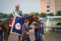 HALLANDALE, FL - JANUARY 28: Arrogate #1, ridden by Mike Smith win the Pegasus World Cup Invitational at Gulfstream Park on January 28, 2017 in Hallandale Beach, Florida. (Photo by Zoe Metz/Eclipse Sportswire/Getty Images)