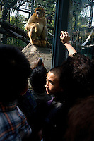 Visitors crowd around a large glass habitat enclosure filled with snub-nosed monkeys at the Beijing Zoo in Beijing, China.