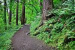 Path to Oneota Falls, Columbia River Gorge National Scenic Area, Oregon