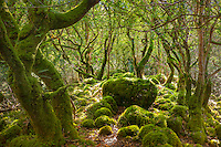 Fairytale Woodlands in County Kerry, Ireland, fr002