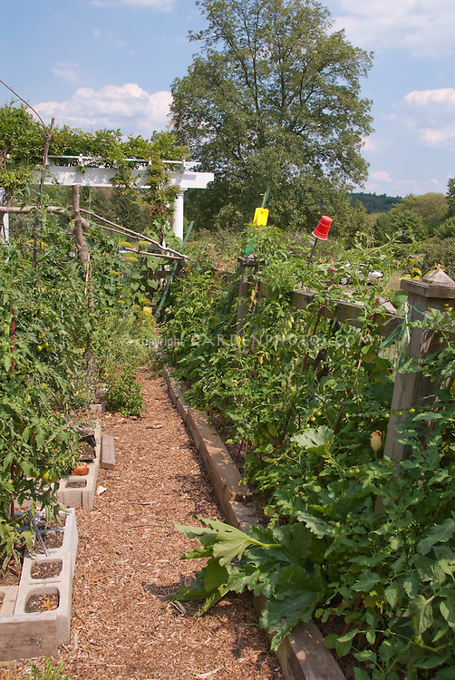 Wooden structure supporting tomatoes and squash in vegetable garden