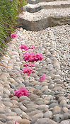 Fallen camellias create a striking contrast against gray stones at Villa Carlotta, Tremezzo, Lake Como, Italy.