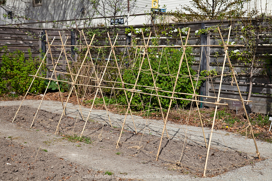 Trellis lb1004 greenfuse photos garden farm Tomato garden design