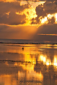 Seaweed gatherer in golden light dawn off Sanur Beach in Bali, Indonesia