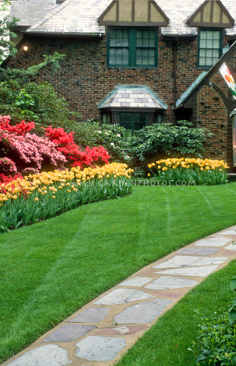 Front entrance garden curb appeal with flagstone path walkway, lawn grass, tulips Tulipa spring flowering bulbs, rhododendron and azalea, Tudor house, Maplewood, NJ