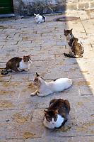 Street Cats, Kotor Montenegro