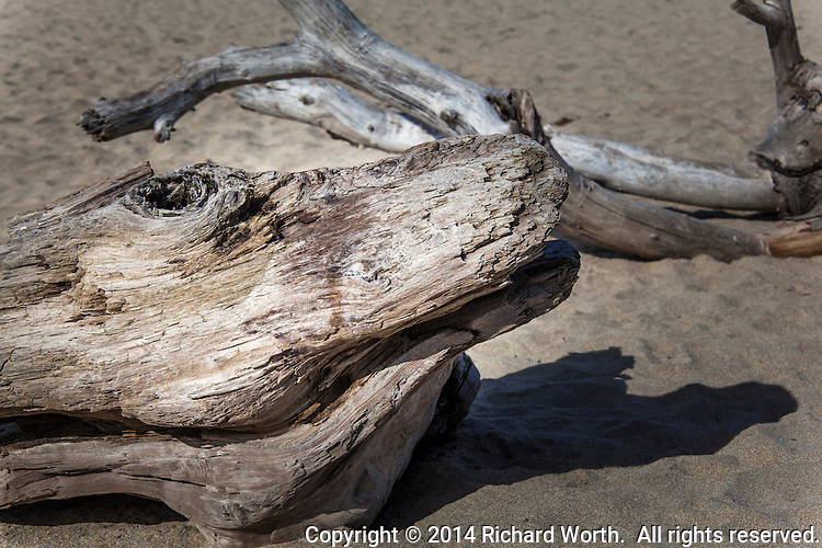From just the right angle, an alligator is easily imagined in this driftwood with a knothole eye, rounded snout and open mouth.