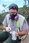 Dr Judd Howell Processing Captured Deer Mouse