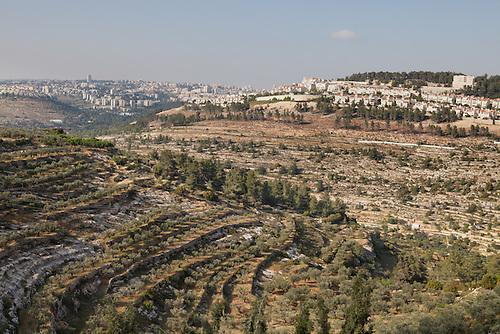 Palestine, Bethlehem, Avril 2015. Vallee de Cremisan. Ces terres appartenant a l'eglise sont menacees par le projet israeilen de construstion du mur de separation dans la vallee. De l'autre cote, on apercoit la colonie de Gilo.