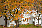 Autumn in the Calvin Coolidge State Historic Site in Plymouth, Vermont, USA