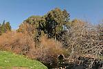 Menashe Heights, Keini stream