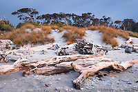 Driftwood and pingao, native sand dune grass at dusk at Ship Creek, World Heritage Area, South Westland, West Coast, New Zealand