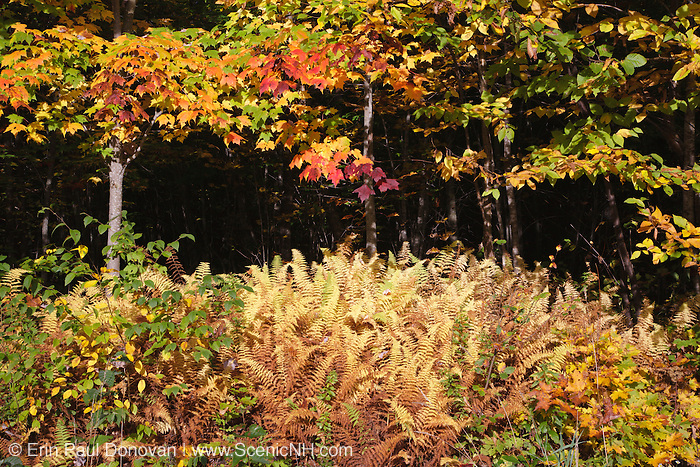 Pondicherry Wildlife Refuge - Mud Pond Trail in Jefferson, New Hampshire USA during the autumn months.