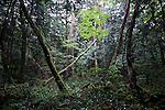 Trees, Japan
