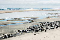 Fishing at low tide at Paturau on west coast of South Island, Nelson Region, New Zealand