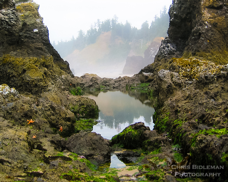 Low tide along the Oregon Coast exposes starfish and seaweed among the rocks with a foggy tree line framed in the background and a pool reflection of the calm scene