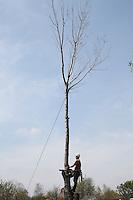 Arborist Cutting Tree Trunk