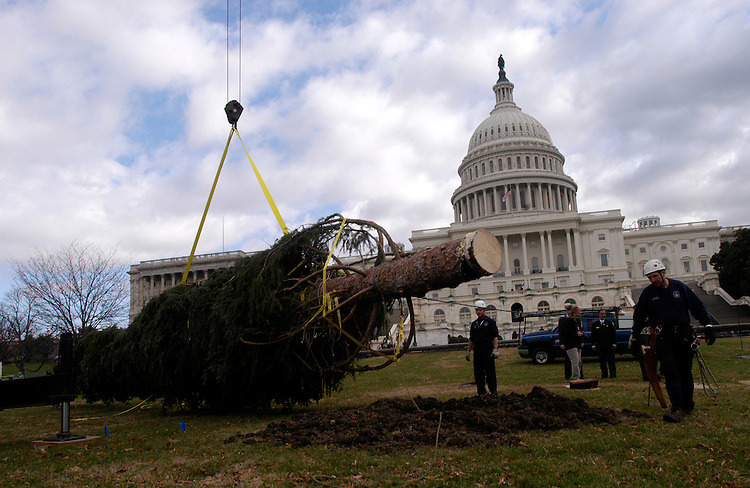 The 2005 Christmas tree, an 80 ft., 6.5 ton spruce from New Mexico, arrives at the Capitol.