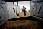 Farmer, Ken Farion, with wheat left over from last season, in Vegreville, Alberta, on Wednesday, May 7, 2008.  Mr. Farion is one of growing group of farmers concerned that too much crop production is going towards the production of bio-fuels, resulting in rising food costs. THE CANADIAN PRESS/John Ulan