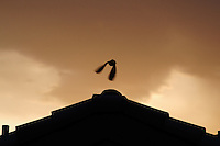 Phoenix, Arizona --  A gray dove flies away from the rooftop of a house with the sunset as a backdrop. Photo by Eduardo Barraza © 2015