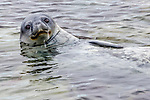 Antarctica , Weddell seal