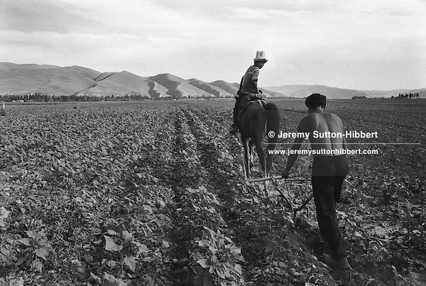 Kyrgyz family work their land near the southern city of Osh. The city was once one of the great cities of the Silk Road and of Central Asia, and is the second biggest city in the country, situated in the unstable Ferghana valley which is now becoming a hotbed if Islamic Fundamentalism,  Osh,  Kyrgyzstan.