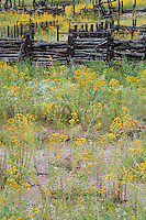 711900005 native wildflowers frame a log fence along the road to roper lake state park in cochise county arizona
