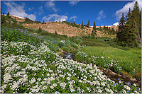 Near the top of Berthoud Pass, wildflower bloom in the summer months on the many streams that flow down from the melting snows. Here, a stream winds its way down to join the Fraser River while supplying water to the many colorful Colorado wildflowers that fill the meadows.