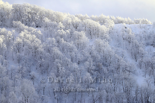 Jan. 26, 2014; Japan - view from the tram to Zao Mountain.
