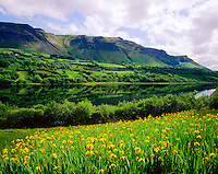 Glencar Lake and Spring Waterflags, County Leitrim, Republic of Ireland