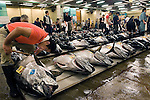 "A buyer at the world's biggest fish Market in Tsukiji, Tokyo inspects large tuna prior to auction at the market. More than 2,300 tons of fish -- about one-third of the total consumed in Japan -- passes through Tsukiji each day and offers more than 450 varieties of marine products. The market, which dates back almost 75, will move to a high-tech site on a man-made island in Toyosu, which is well-documented as being contaminated with benizine. Not that Tsukiji is much better off -- many buildings in the aging site are stuffed with asbestos. ""Choose your poison,"" says one Tsukiji official. The new site, which the government plans to be readied by 2012, will be significantly larger, with more room for off-loading and for sellers to display their goods. The current location, says one official, is too cramped and collisions between motorised carts and pedestrians means accidents occur almost daily. Meanwhile, with fish sales down, it is becoming more difficult to justify Tsukiji's prime location and property developers are keeping a close watch on Tsukiji land, which is just a few blocks from the ritzy Ginza district of Tokyo, where per-meter land prices are the highest in the world...The move to the new Toyosu location, meanwhile, has been at the center of heated debate -- clean-up operations alone are estimated to cost ¥67 billion (around US$660 million), with a further ¥450 billion to build a new marketplace. Big wholesalers favour the move, but the 1,600-plus merchants mostly are against it. Yoshiharu Kiku, a Tsukiji storeowner who began working at the market 60 years ago, expresses bewilderment at the plans, saying that the name Tsukiji itself has become synonymous with the world's best and most eclectic selection of fish. ""This place has a long tradition. Why break it and start from scratch all over again?"" he says."