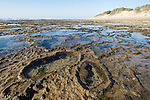 intertidal rock platforms of iSimangaliso Marine Protected Area, iSimangaliso Wetland Park, KwaZulu Natal, South Africa,