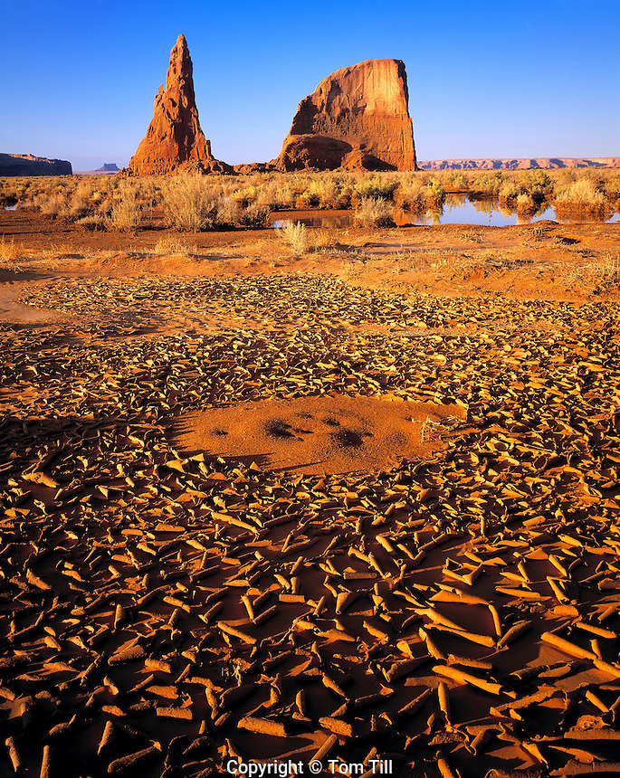 Mud Patterns at the Dancing Rocks, Navajo Reservation, Arizona  Also called Whale Rocks