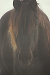 Close-up of Horse in fod