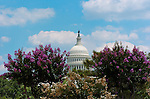 United States Capitol Dome, Blooming Crape Myrtle, Capitol Hill, National Mall, Washington DC