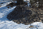 Snow melted from Compost pile heat