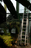 Tropical Rainforest Glasshouse (formerly Le Jardin d'Hiver or Winter Gardens), 1936, René Berger, Jardin des Plantes, Museum National d'Histoire Naturelle, Paris, France.  Detail of a ladder against the glass and metal walls of the Art Deco building with palm tree and banana foliage in the foreground.