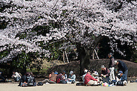 Higashi-Gyoen, the East Gardens of the Imperial Palace, is a popular place for hanami parties to celebrate the flowering of the plum and cherry blossom