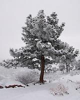 Fresh Snow, Boulder CO