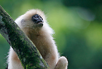 Borneo 2012