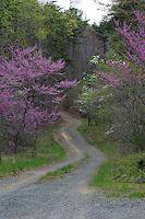 Spring blooms alongside a road.