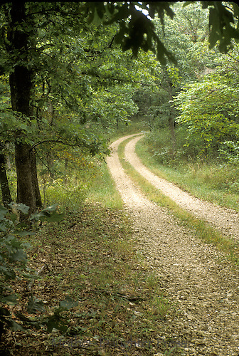 Country road through oak hickory and maple woods, in summer