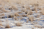 Ice fog creates a shimmering palette of colors among the frost-covered grasses.